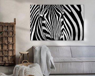 Zebra von Erik de Klerck