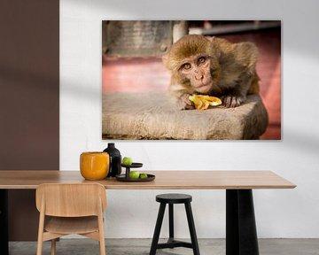 Neugieriger Affe von Ellis Peeters