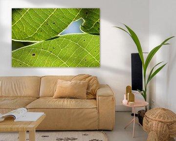Leaves von Stefan Wapstra