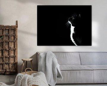 schwarz / weiße Katze, die neugierig schaut von Geert D