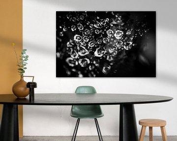 Abstract : Regendruppels in een spinnenweb von Geert D