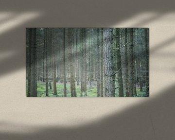 Tree lines van Jelle Dekker