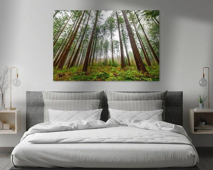 Sfeerimpressie: Dennenbomen in het bos tijdens een mistige dag van Sjoerd van der Wal