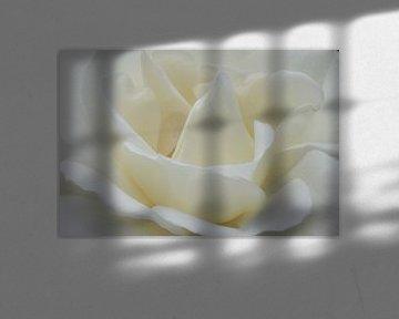 roos von Ries IJsseldijk