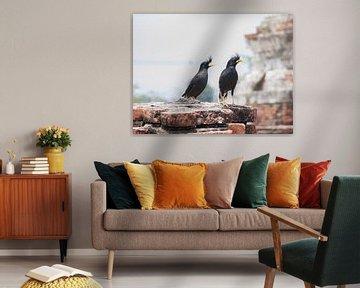 Vogels in Thailand van Paul Tolen
