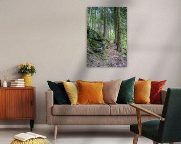 smal pad in het naaldbos van Mark van den Burg