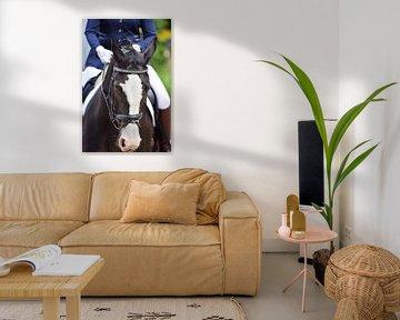 dressuurpaard  van Rachel Beijkirch