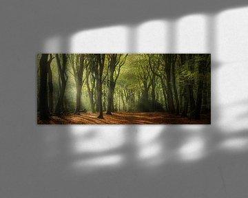 Ochtend groen van Joris Pannemans - Loris Photography