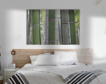 Bamboe bos in grijs en groen  - Bambuseae van whmpictures .com
