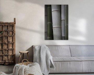 Bamboestammen in grijs en groen - Bambuseae van whmpictures .com