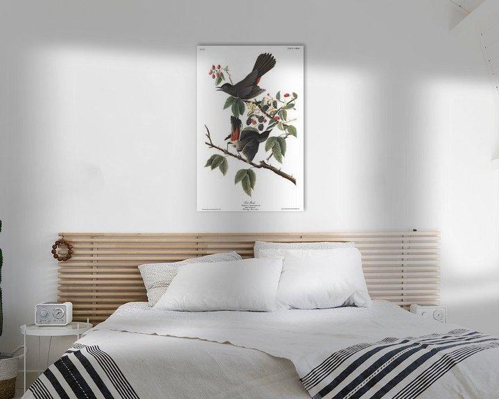 Sfeerimpressie: Katvogel