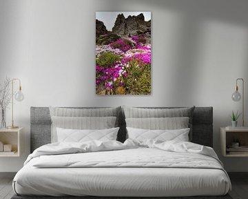 Bloemenpracht op de rotsen van Ron ter Burg