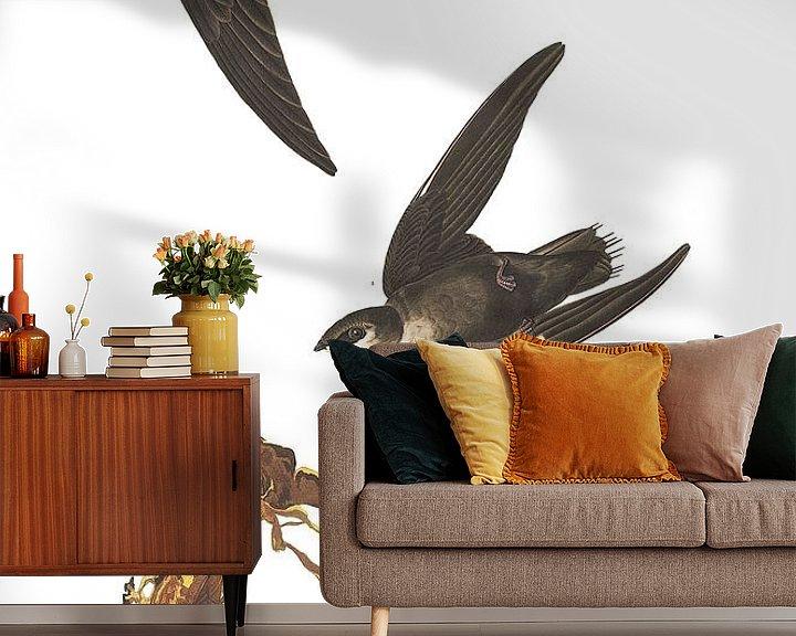 Sfeerimpressie behang: Gierzwaluw