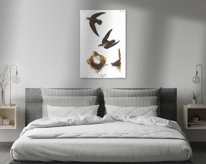 Sfeerimpressie: Gierzwaluw