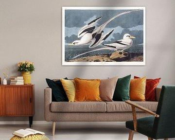 Keerkringvogels