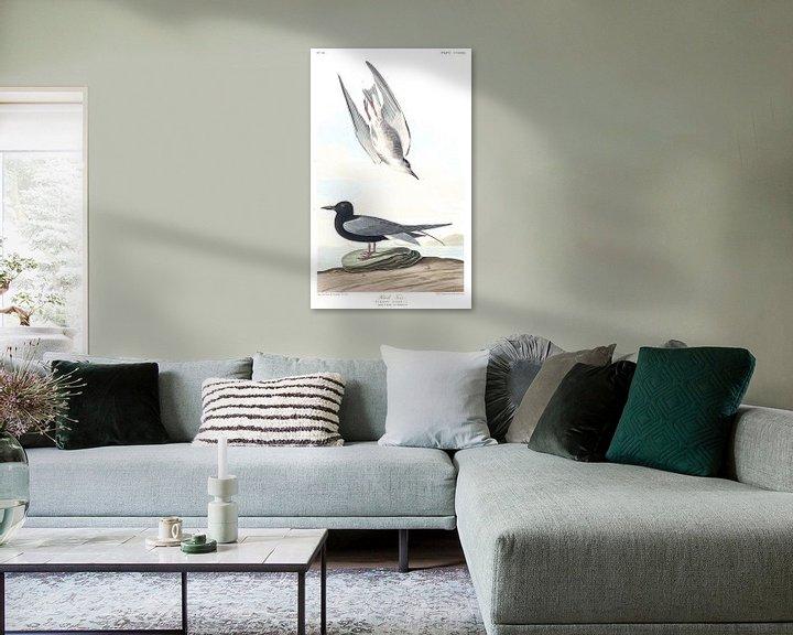 Beispiel: Trauerseeschwalbe