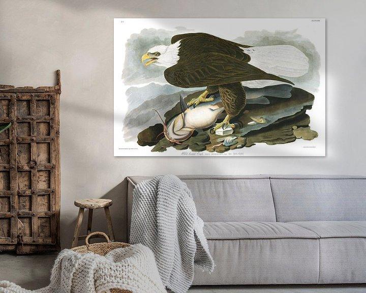 Beispiel: Weißkopfseeadler