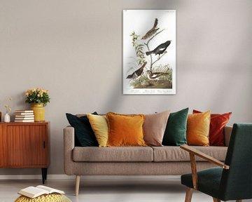 Brauner Singammer