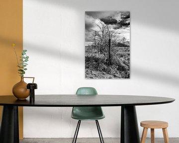Tree. van Jakob Huizen van