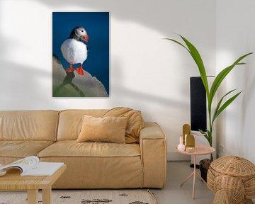 Papegaaiduiker van Kneeke .com