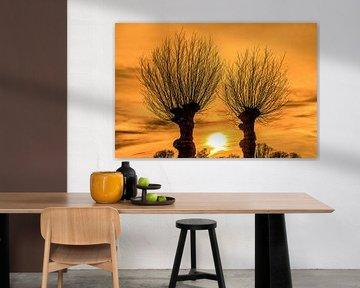 Zonsondergang tussen twee wilgenbomen in het Friese platteland van Harrie Muis