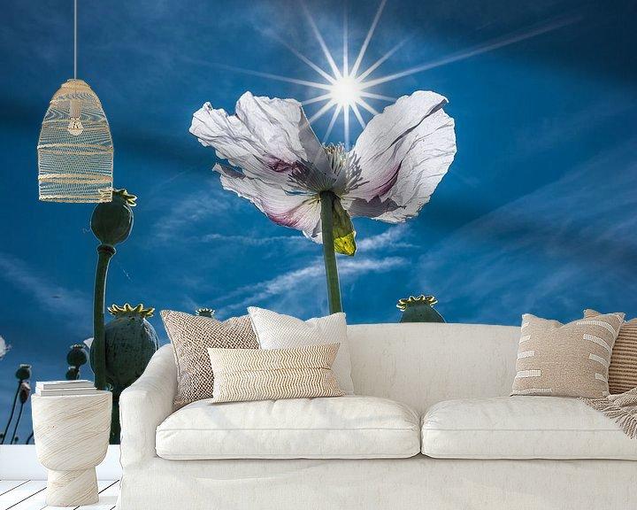 Sfeerimpressie behang: Witte klaproos met de zon in stervorm als tegenlicht van Harrie Muis