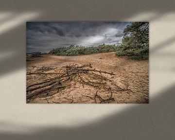 Wekeromse Zand  van Rijk van de Kaa
