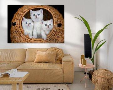 Drei weiße Kätzchen im Weidenkorb auf schwarzem Hintergrund von Ben Schonewille