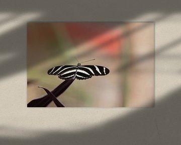 Noir Blanc Papillon