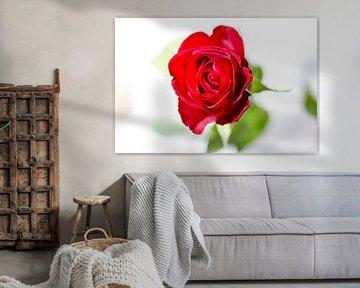 Red Rose von Leon Weggelaar