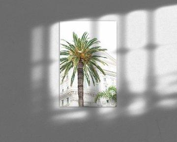 Palmboom in Nice van Lisenka l' Ami Fotografie