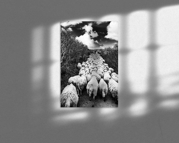 Sfeerimpressie: Schapen kudde met herder in de Katwijkse duinen - zwart wit van MICHEL WETTSTEIN