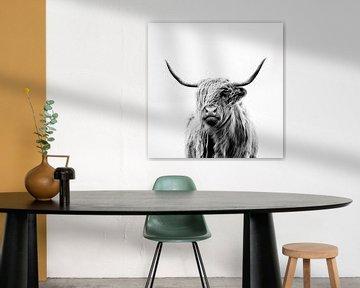 portrait of a highland cow von Dorit Fuhg