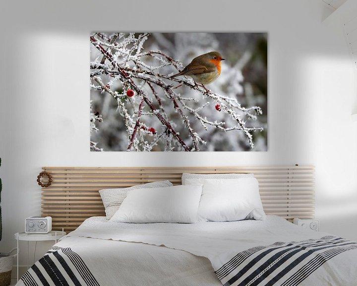 Sfeerimpressie: roodborstje  winter van Niels  de Vries