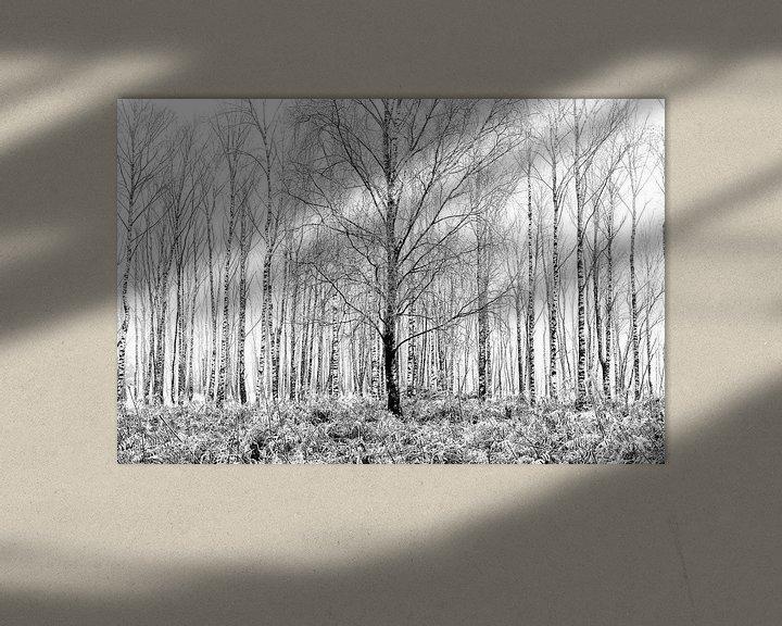 Sfeerimpressie: Berken in de mist van Remco Stunnenberg