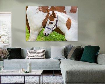 Pasgeboren veulen bij moeder paard in wei van Ben Schonewille