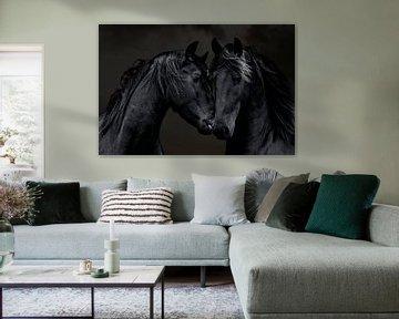 Le cheval frison, un portrait de 2 Frisons sur Gert Hilbink