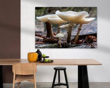 family mushrooms