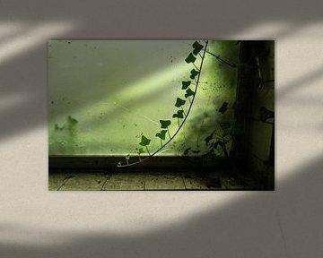 Urbex vervallen raam met tak klimop von Leoniek van der Vliet