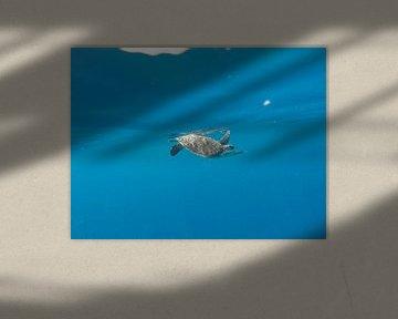 Meeresschildkröte direkt unter der Oberfläche von Stijn Cleynhens