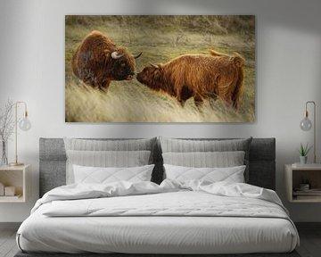 Wildlife schotse hooglander van Dirk van Egmond