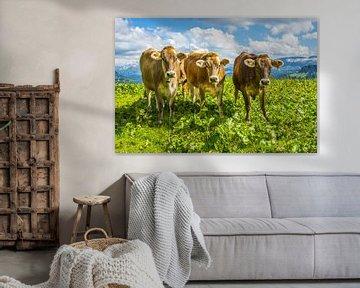 Allgäu cows van Walter G. Allgöwer