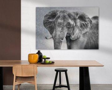 Stolze Elefanten-Kuh von Joachim G. Pinkawa