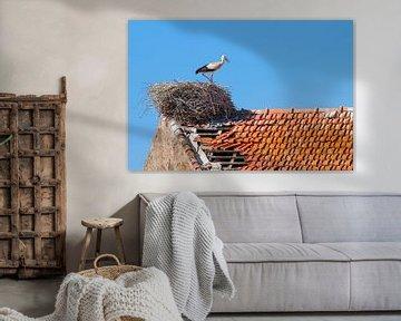 Storch steht im Nest auf dem Dach des Gebäudes von Ben Schonewille