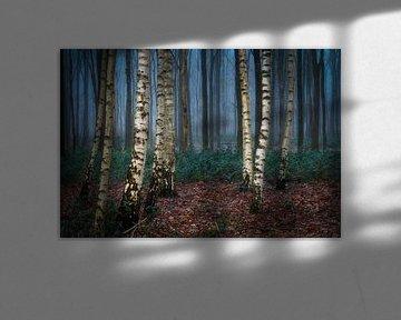 Birkenbaum in einem schwermütigen nebligen Wald von Jos Pannekoek