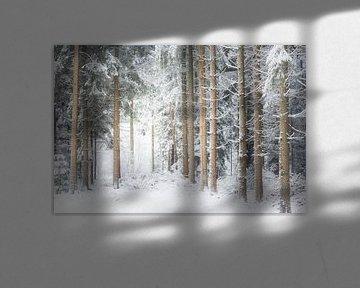 Dwingelder bossen van Ton Drijfhamer