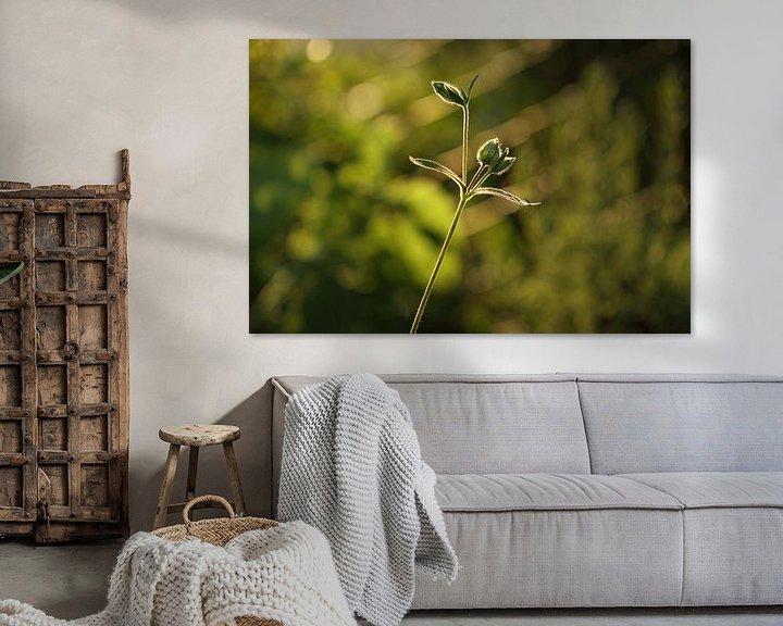 Sfeerimpressie: garden flower van Erich Werner