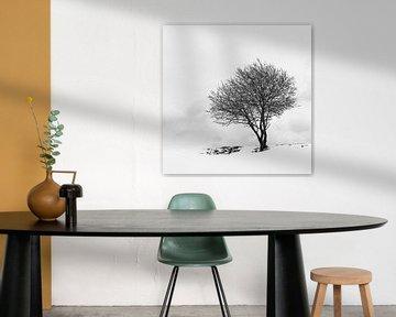 Lonely Tree in the snow von Daniel Raab