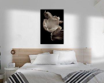Blume, Amaryllis (ohne Titel) von Henriëtte Mosselman