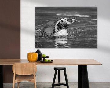 Humboldt-Pinguin von Heinz Grates
